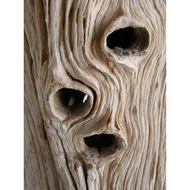 Large Driftwood Tree Trunk Sculpture For Sale - Image 10 of 10