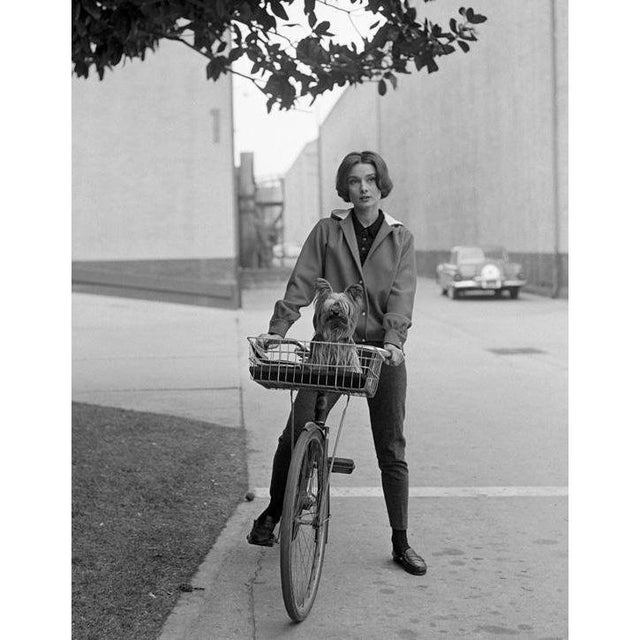 1950s Audrey Hepburn & Her Pet Dog Famous on Paramount Studios Back Lot 1957 For Sale - Image 5 of 5