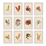 Image of Capistrano Seaweed, Small, Framed Artwork - Set Of 12 For Sale