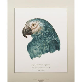 1590s Anselmus De Boot Gray Parrot Head Study N2 Print For Sale