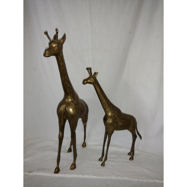 Gorgeous patina on this mid Century pair of brass giraffes. Nice detailing in design. No maker mark just remnants of old...